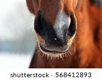 The Nostrils Of Horses
