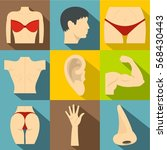 outer part of body icons set....   Shutterstock .eps vector #568430443