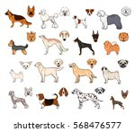 dog breeds  side view and... | Shutterstock .eps vector #568476577