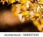 autumn leaves japan | Shutterstock . vector #568507243