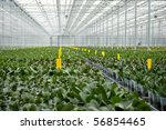 Green House With Orchid Plants...