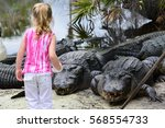 little girl feeds alligators | Shutterstock . vector #568554733