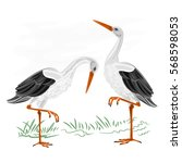 storks white wild water bird... | Shutterstock .eps vector #568598053