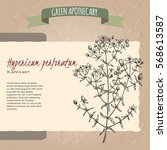 hypericum perforatum aka common ... | Shutterstock .eps vector #568613587