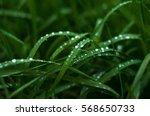 fresh green grass with dew... | Shutterstock . vector #568650733