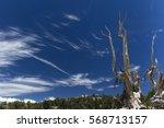pine trees and bare granite... | Shutterstock . vector #568713157