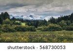 beautiful garden like forest in ... | Shutterstock . vector #568730053
