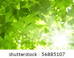 Beautiful Green Leaves And...
