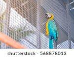 Beautiful Blue And Yellow Maca...