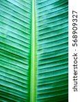 banana leaf  | Shutterstock . vector #568909327