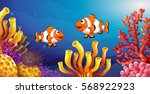 underwater scene with clownfish ... | Shutterstock .eps vector #568922923