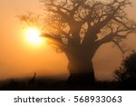 a lone giraffe walks past a... | Shutterstock . vector #568933063