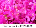 Pink Orchid Flower Pattern...