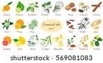 big vector set of essential oil ... | Shutterstock .eps vector #569081083