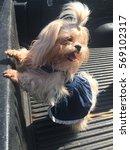 Stock photo dog wearing a denim fashion 569102317