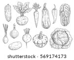 vegetables icons. vector sketch ... | Shutterstock .eps vector #569174173