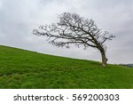 Old Tree On A Hill All Alone I...