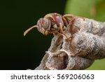 Super Macro Wasp And Larvals I...