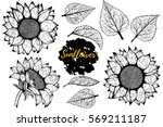 Stock vector sunflower vector set of hand drawn sunflowers and leaves isolated on white background 569211187