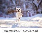 Stock photo golden retriever puppy outdoor on the snow in winter 569237653