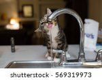 Stock photo small gray black and white kitten drinking water from kitchen sink faucet 569319973