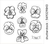 Pansy Flower Vector Set....
