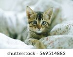 Stock photo the cute kitten on bed 569514883