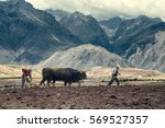 sharecroppers plowing a field... | Shutterstock . vector #569527357