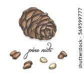 isolated pine nuts on a white... | Shutterstock .eps vector #569599777