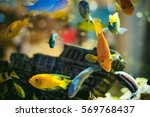 Aquarium Cichlid Exotic Fish....