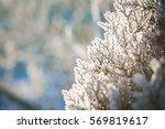 winter background | Shutterstock . vector #569819617