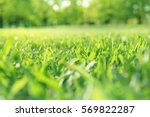 spring and summer background... | Shutterstock . vector #569822287