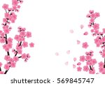 cherry blossom flowers... | Shutterstock .eps vector #569845747