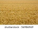 landscape of wheat field | Shutterstock . vector #56986969