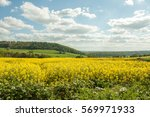 Canola Crops Growing In The...
