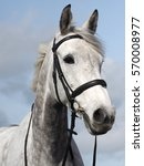 A Head Shot Of A Grey Horse In...