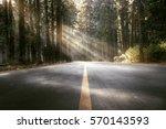 Street Through The Woods