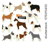 Dog Collection. Vector Set Of...