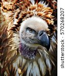 Stock photo close up of large brown cape vulture 570268207