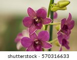 closeup of flower in hilo hawaii   Shutterstock . vector #570316633
