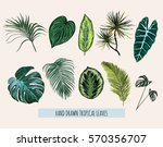 Beautiful hand drawn  botanical vector illustration with tropical leaves. Isolated on white background. | Shutterstock vector #570356707