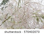 frozen plants covered in a...   Shutterstock . vector #570402073