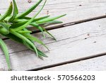 aloe on a wooden background | Shutterstock . vector #570566203
