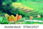 beautiful leave heart shaped... | Shutterstock . vector #570611017