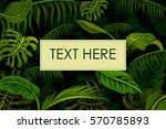abstract exotic tropical leaf... | Shutterstock .eps vector #570785893