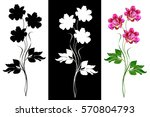 colorful bright flowers peonies ... | Shutterstock . vector #570804793