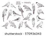 Parrots Birds Line Graphic Set