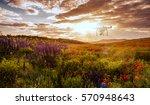 drone over poppy field.... | Shutterstock . vector #570948643