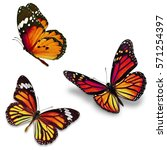 three monarch butterfly ... | Shutterstock . vector #571254397