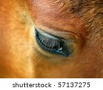 Closeup Of A Horse's Eye